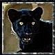 Puma63