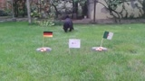 Bélyeg jósol: Németország-Algéria
