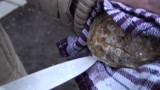 Osztrigabontás mezei késsel