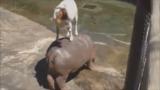 Intelligens állatkák