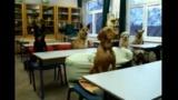 Egy nap a kutyasuliban