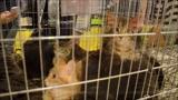 Royal Canin MMME Nemzetközi Macskakiállítás 2