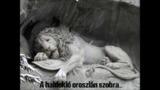 ARCO - A gyilkos oroszlán (+18!)