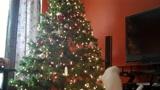 Cica játszik a karácsonyfával