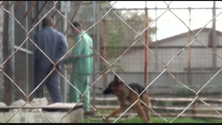 Vakvezető kutya képzés a fiatalok börtönében